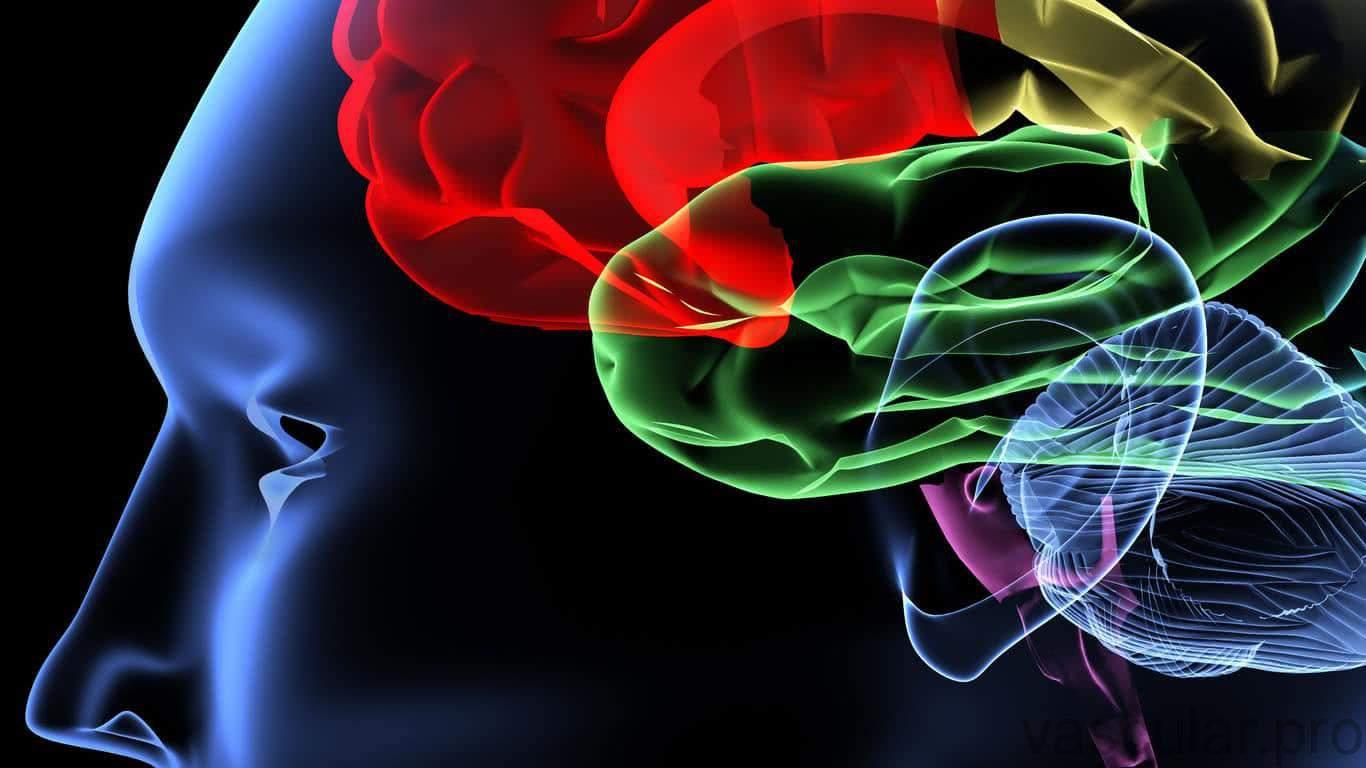 Cerebro e o AVC