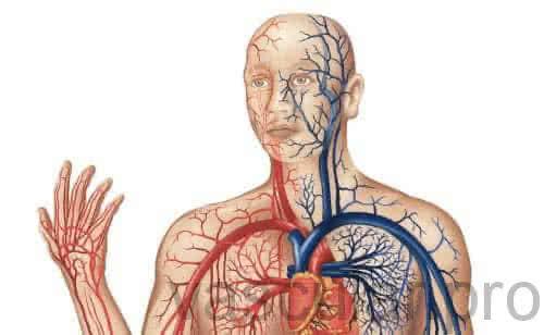 Sistema Arterial: artérias que levam o sangue<span class=